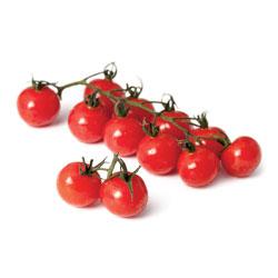Tomate rouge en grappe