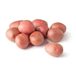 pomme de terre rouge