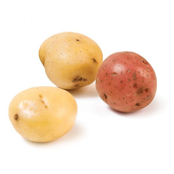 La patate, un peu partout!