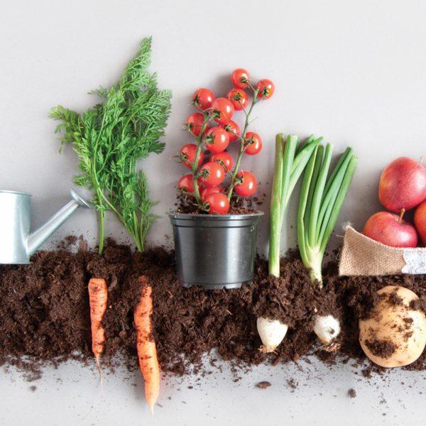 Guide pratique des légumes de saison