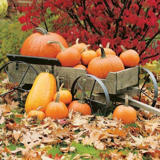 Les origines de l'Halloween : la citrouille démasquée!