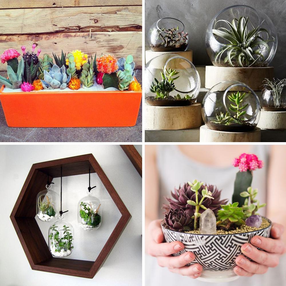 Decoration Avec Plantes Grasses pinterest: 25 idées déco avec des cactus, des succulentes et