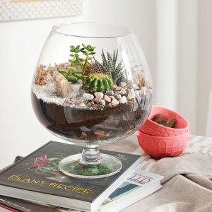 En étapes: créer un terrarium parfait