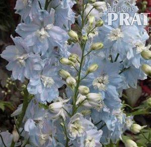 Pied-d'alouette 'Magic Fountains Bleu Ciel'