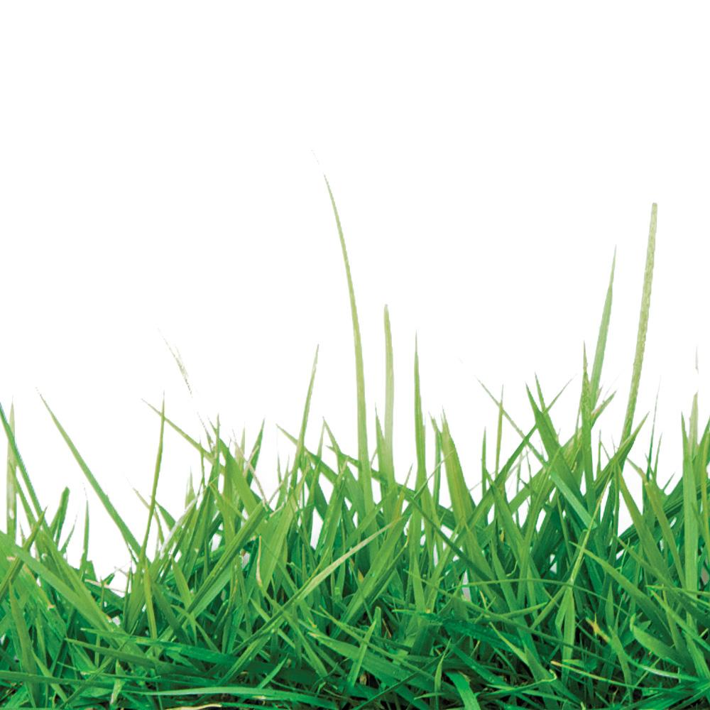 4 trucs pour avoir un gazon plus vert que celui du voisin