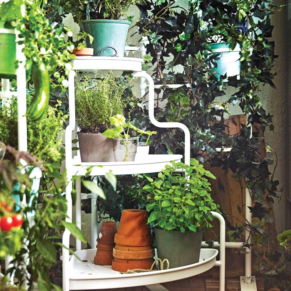 Vos plantes et les grandes chaleurs