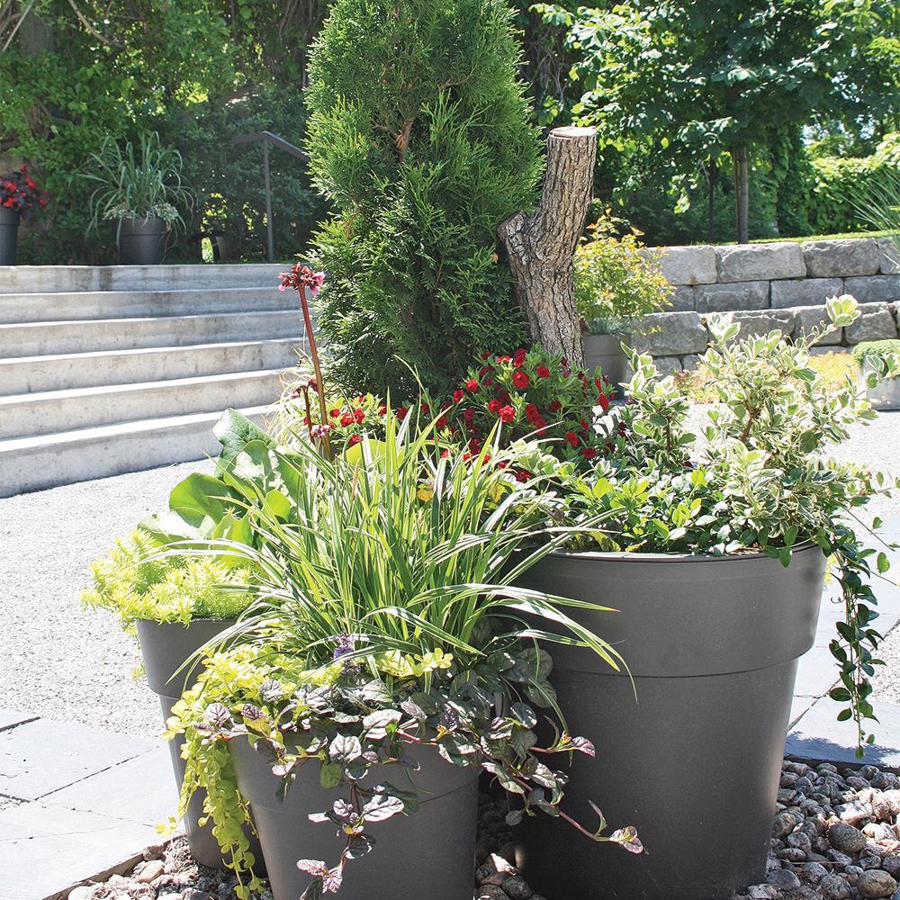 arbustes et vivaces en pot comment faire je jardine. Black Bedroom Furniture Sets. Home Design Ideas