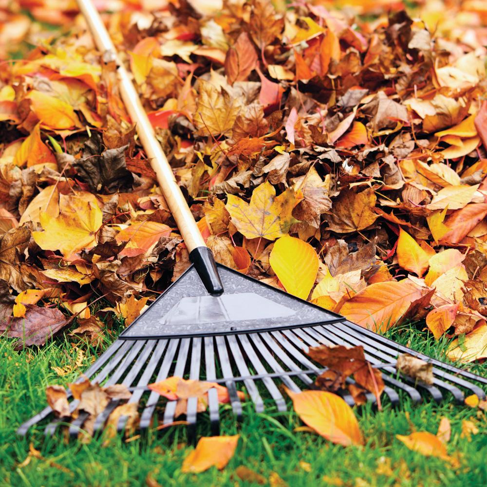 Quoi faire sur notre terrain à l'automne?