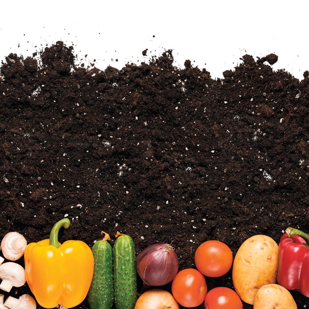 Legumes A Mettre Dans Le Jardin top 10 des légumes qui poussent tout seuls - je jardine