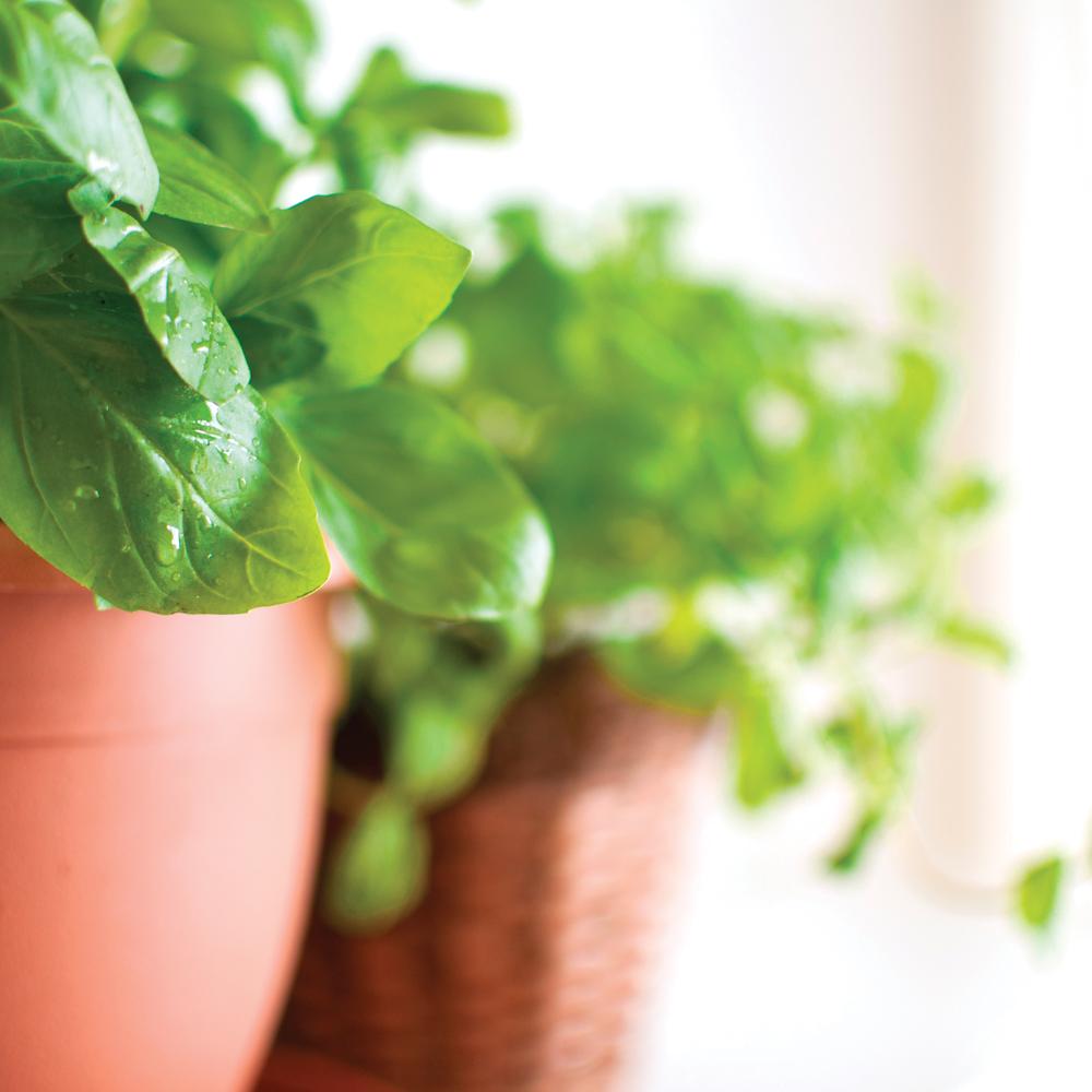 Potager en pot: la solution idéale pour les petits espaces