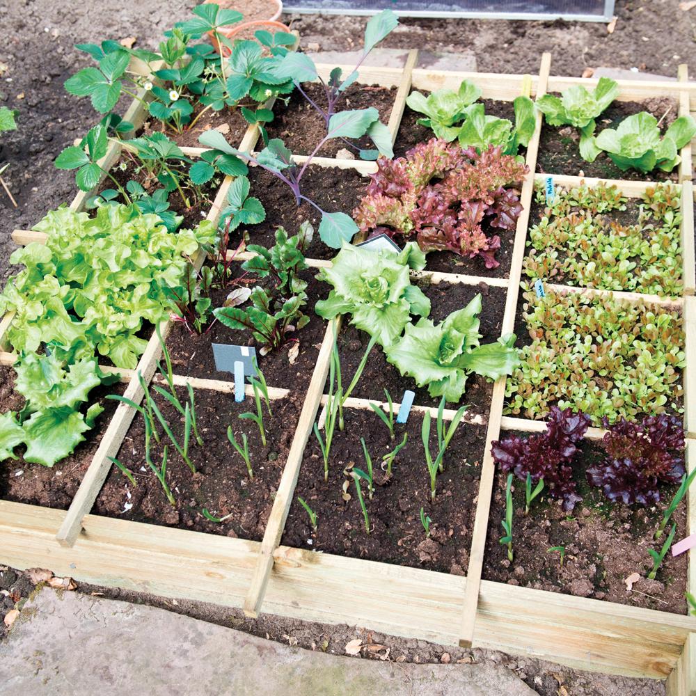 En étapes: faire son jardin en carrés