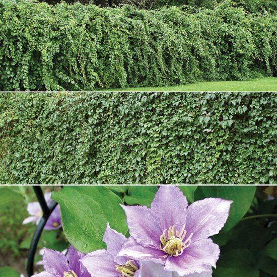 3 plantes de camouflage à découvrir