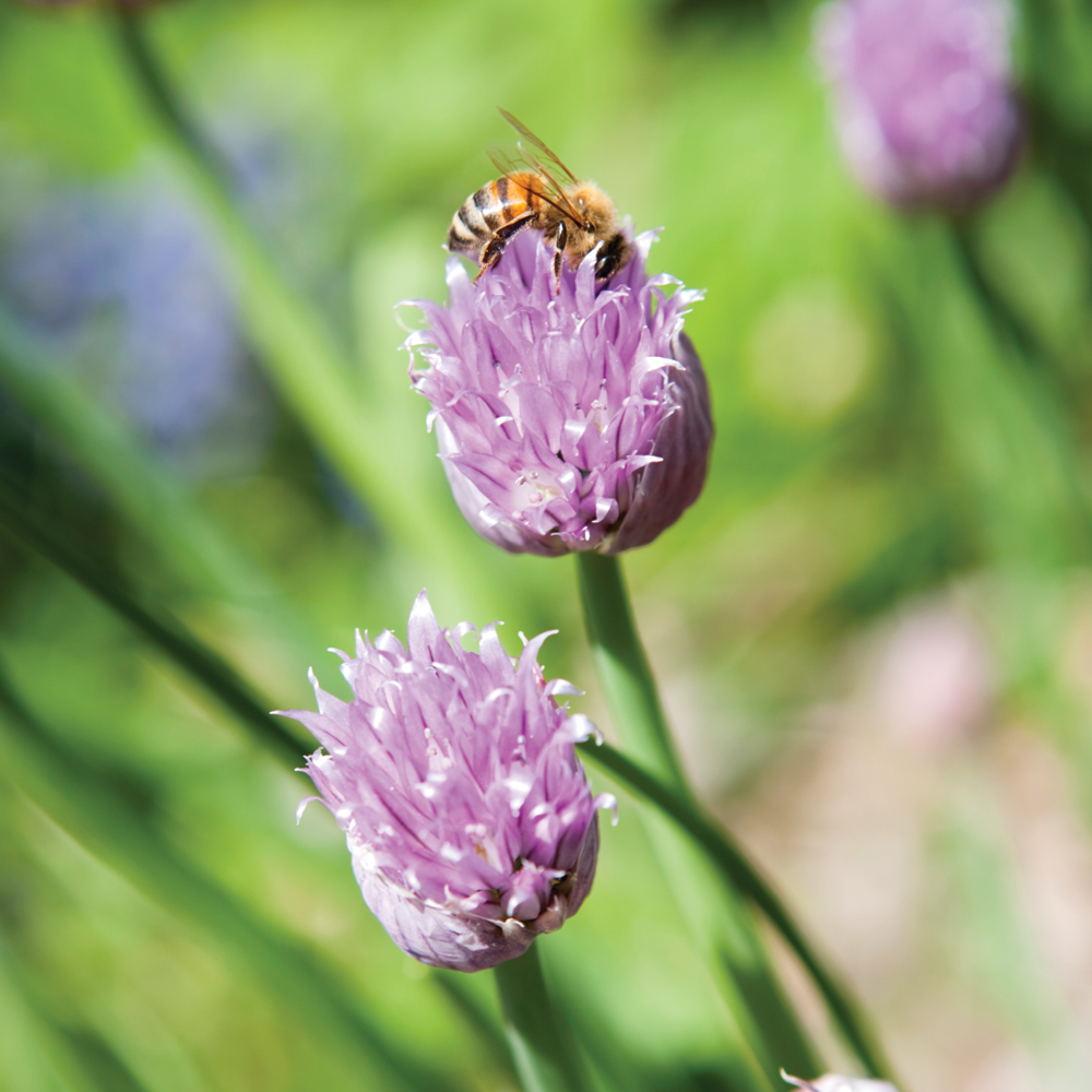 9 insectes et bestioles utiles au jardin