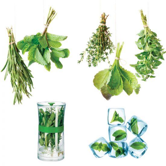 3 modes de conservation pour les fines herbes