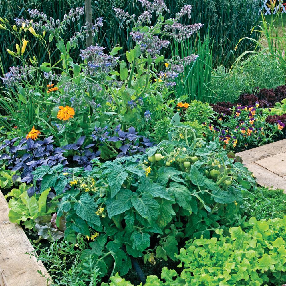Les bienfaits des fleurs au jardin - Je Jardine