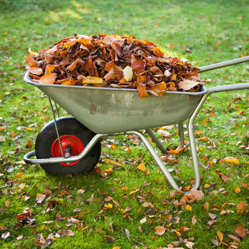 Quoi faire en automne au jardin