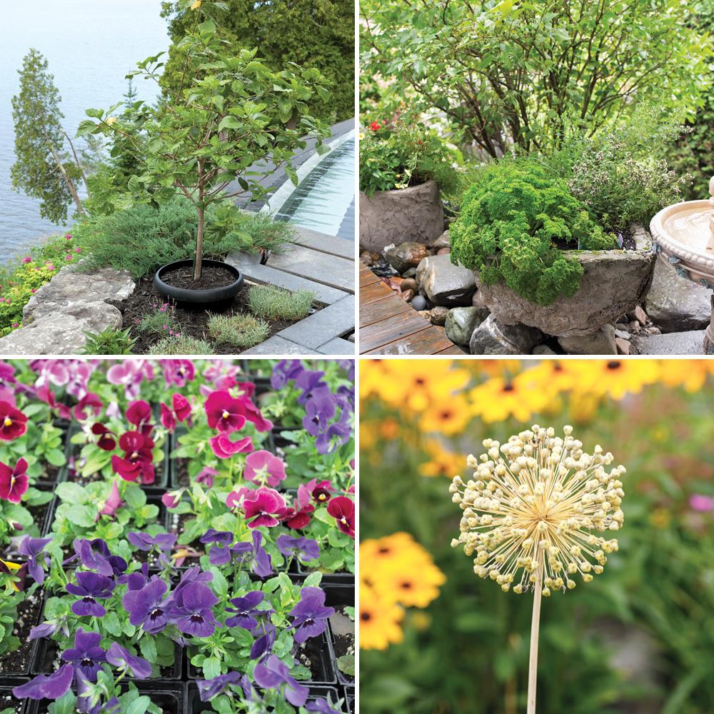 5 conseils pour bien choisir ses fleurs