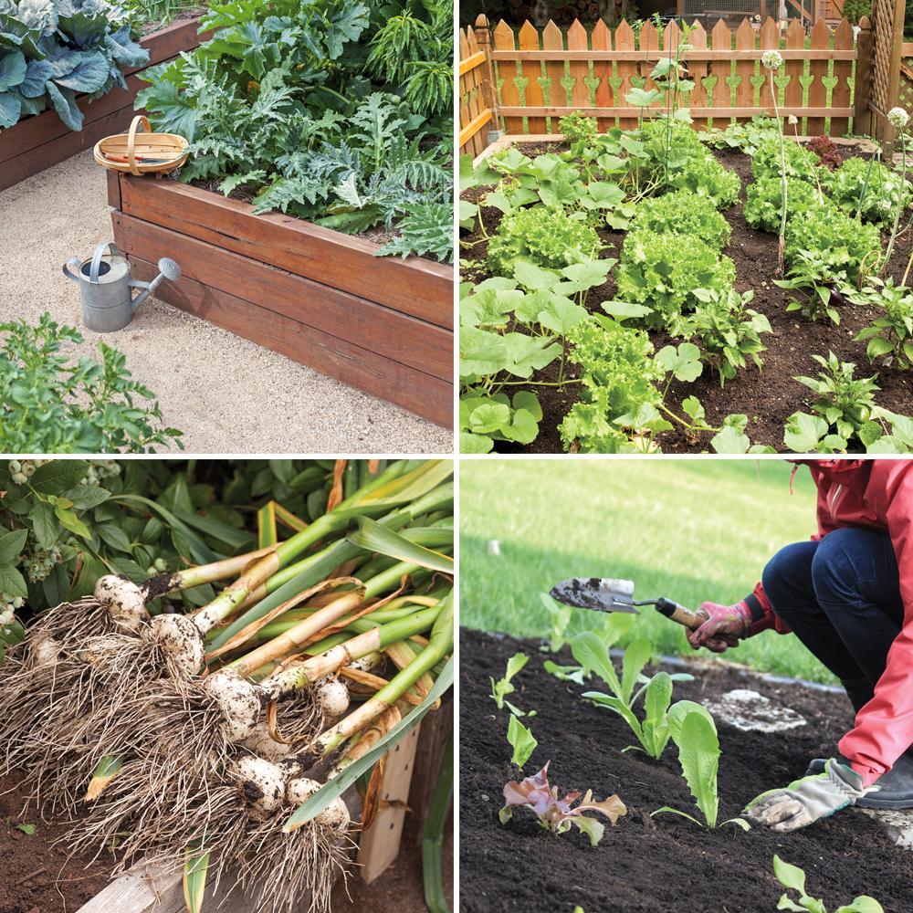 10 conseils d'un pro jardinier pour les jardiniers débutants