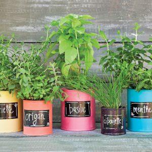 Pots à fines herbes