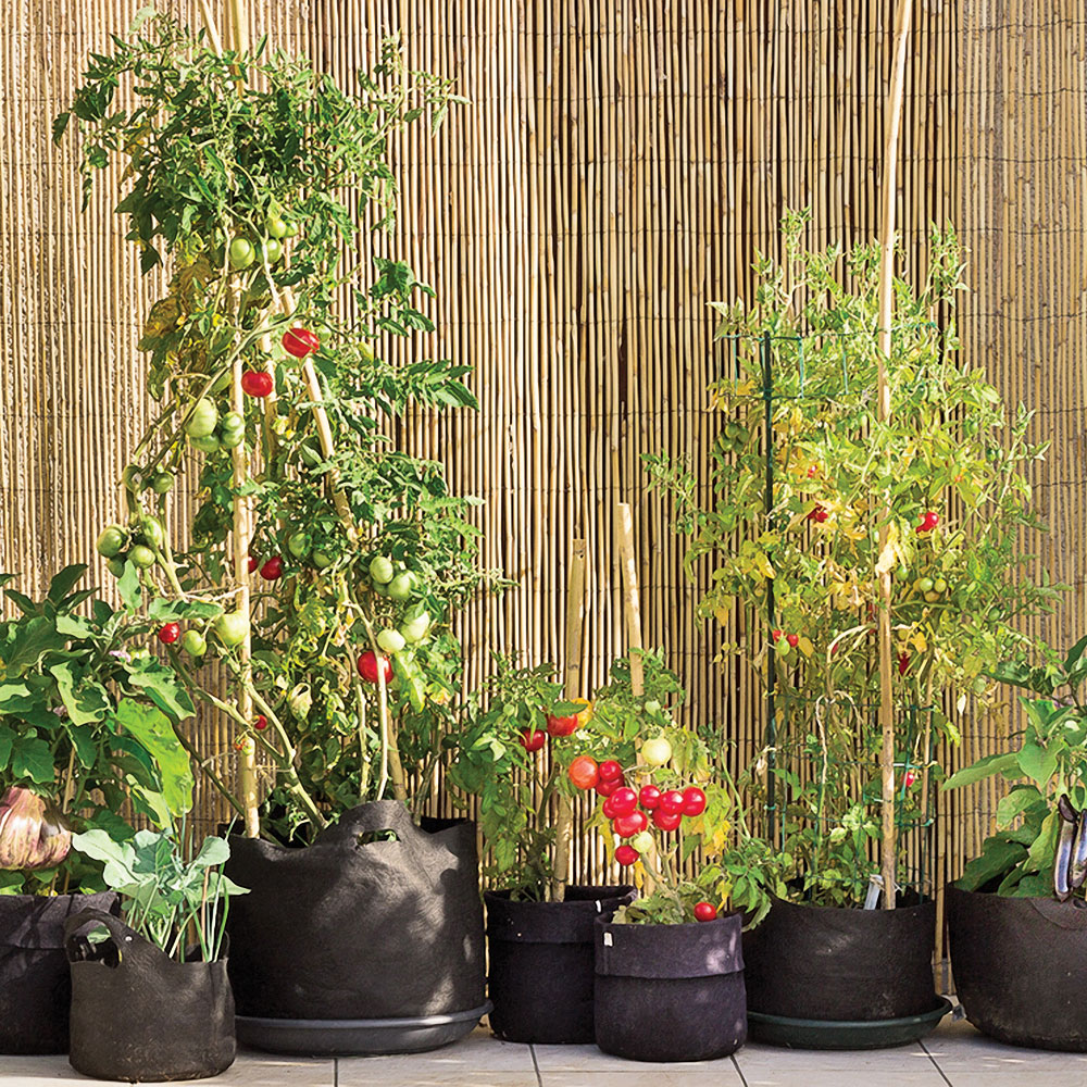 Cultiver dans des sacs en géotextile