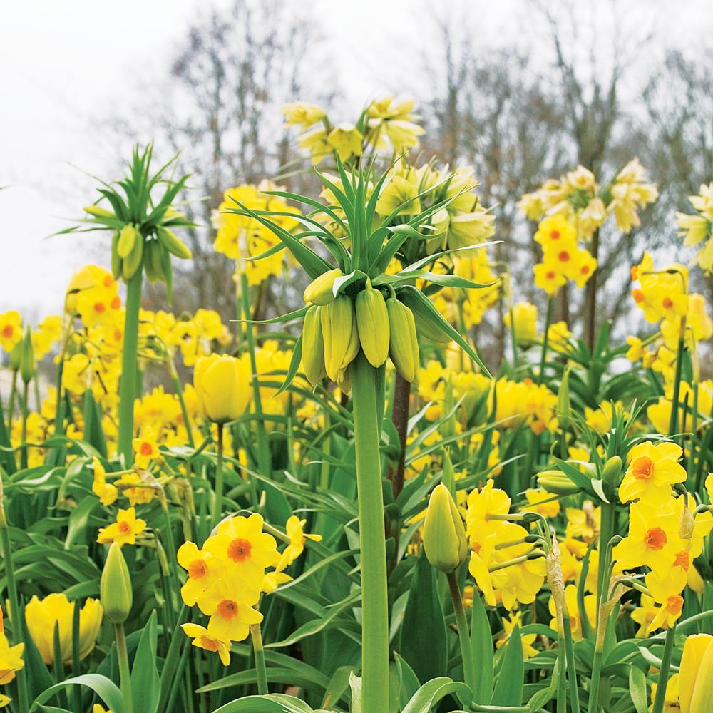Sélection de plantes pour des platebandes fleuries au printemps