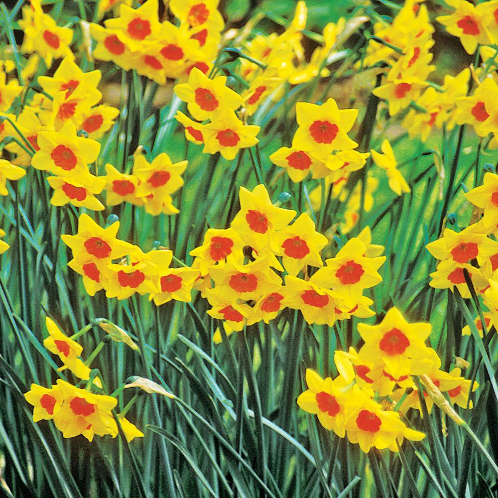 selection-de-plantes-pour-des-platebandes-fleuries-au-printemps02