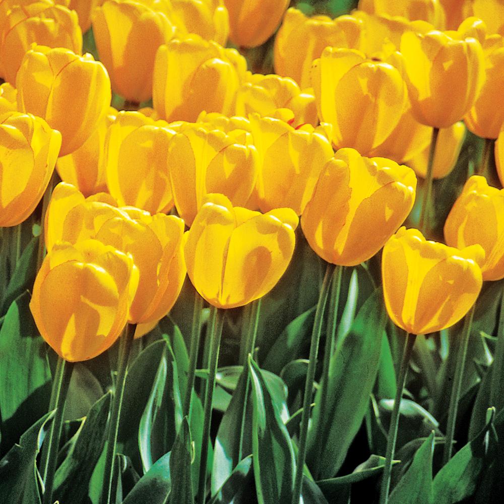 selection-de-plantes-pour-des-platebandes-fleuries-au-printemps03