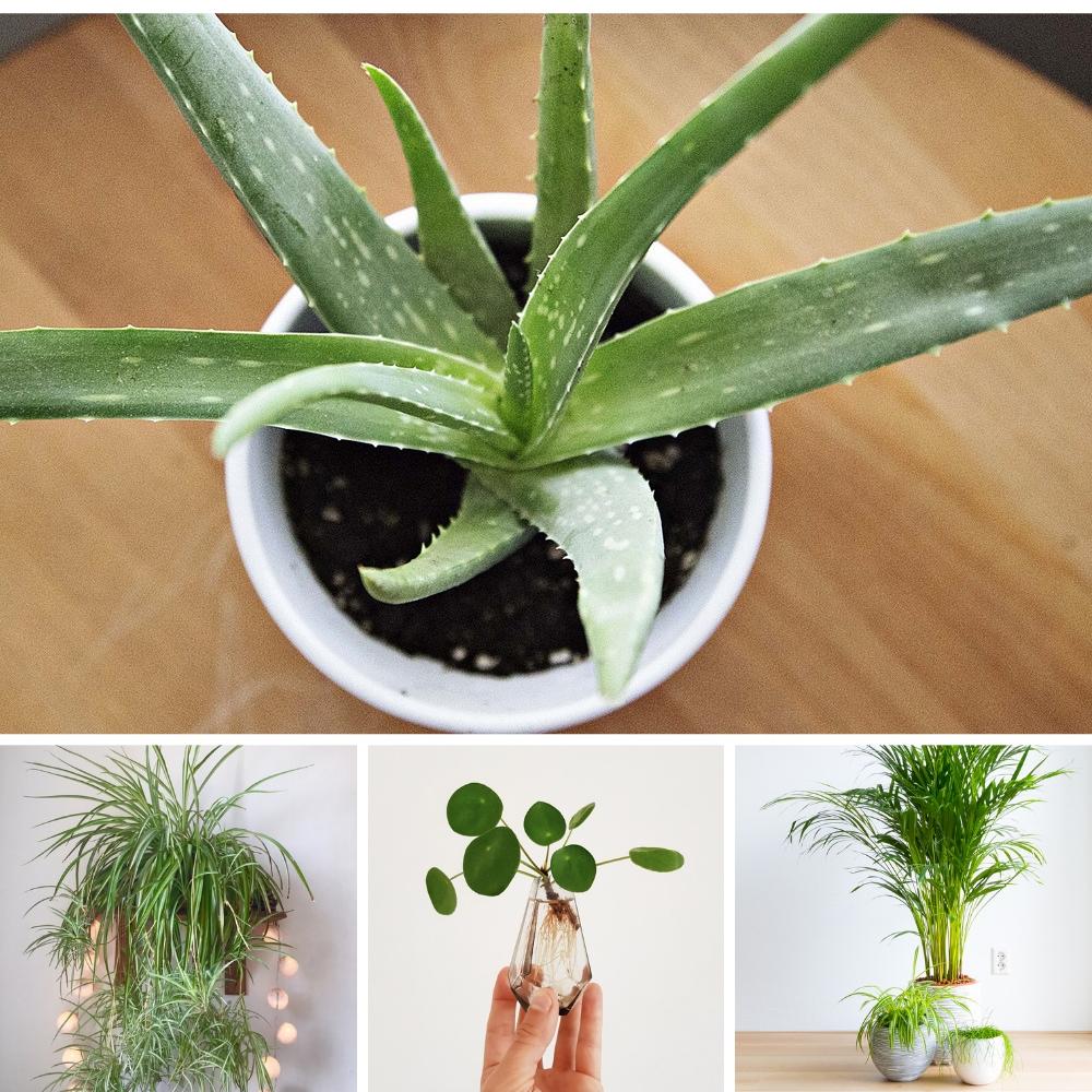 Comment Entretenir Une Plante Aloe Vera top 10 des meilleures plantes d'intérieur (et comment ne pas