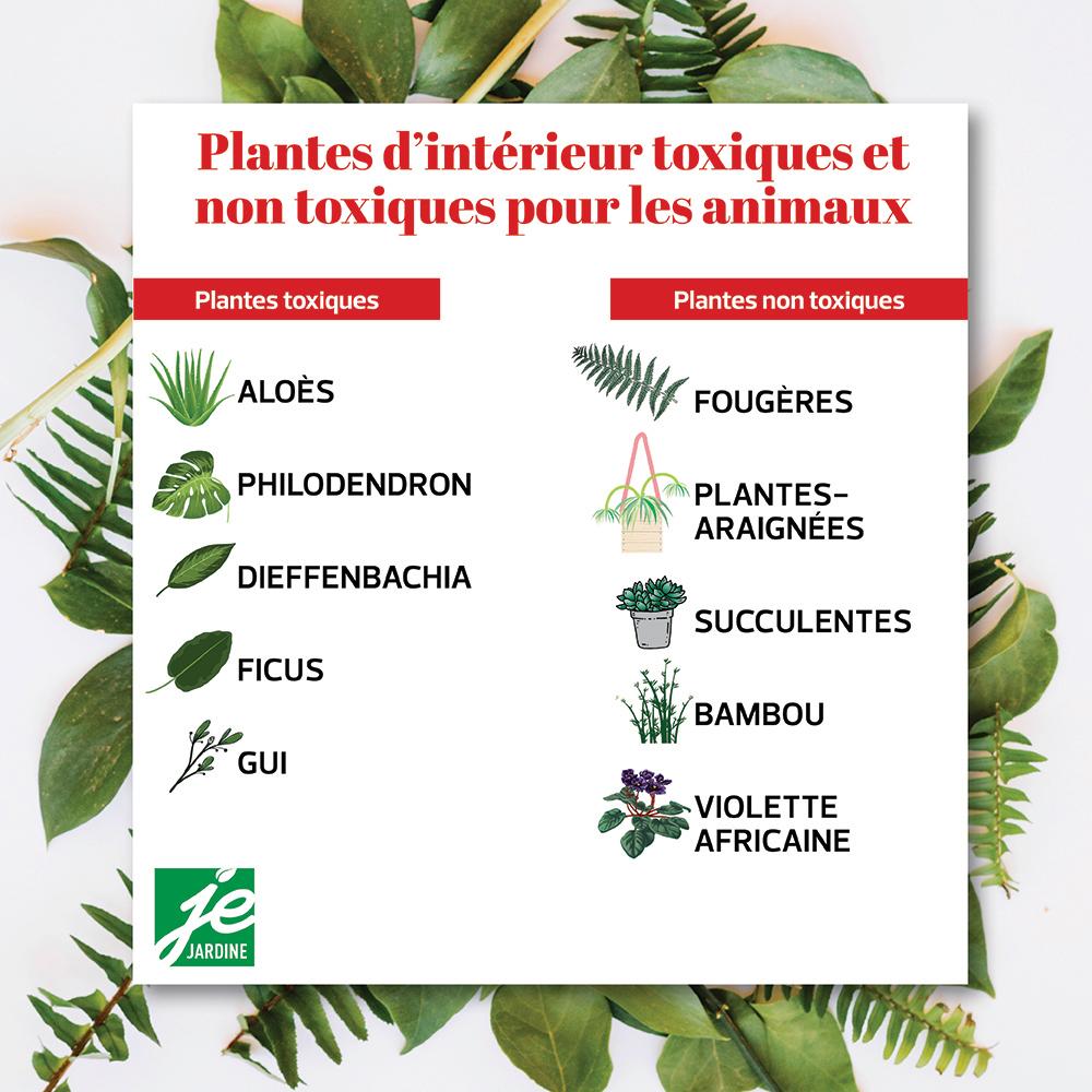 Plantes d'intérieur toxiques et non toxiques pour les animaux