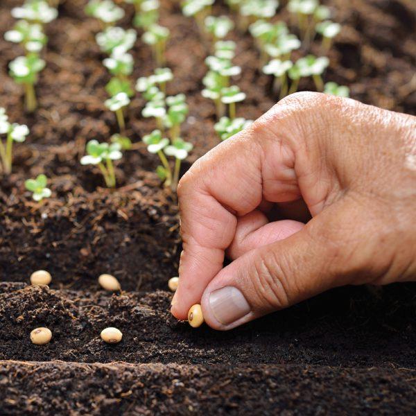 Calendrier des semis pour légumes de potager