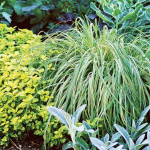 Sélection de plantes pour une platebande garnie de feuillage