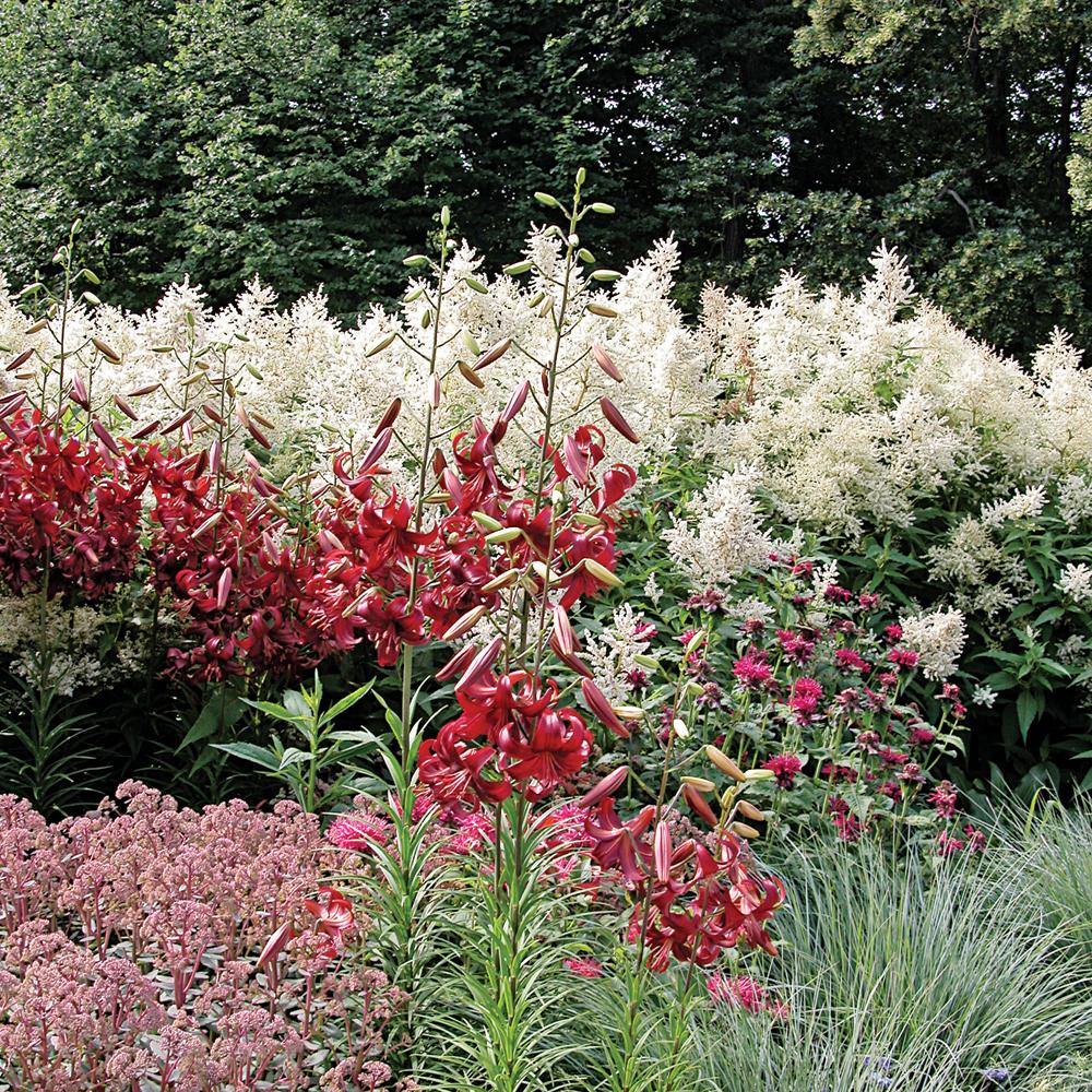 Sélection de plantes pour un contraste rouge et blanc dans la platebande