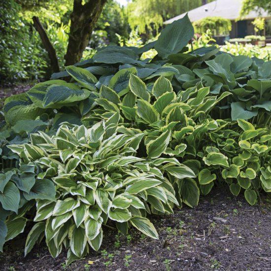 Bien vivre au jardin : 5 conseils pour diviser les plantes vivaces