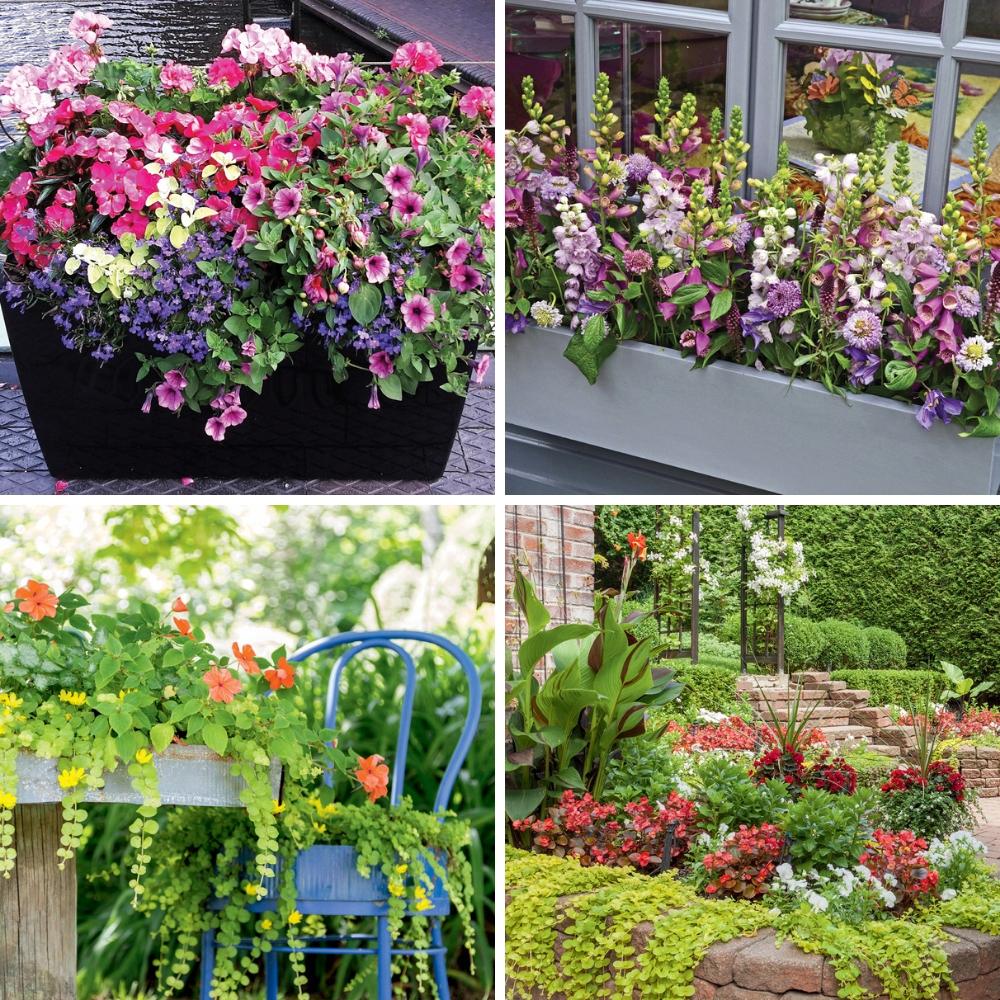 5 combinaisons de fleurs parfaites pour les jardinières