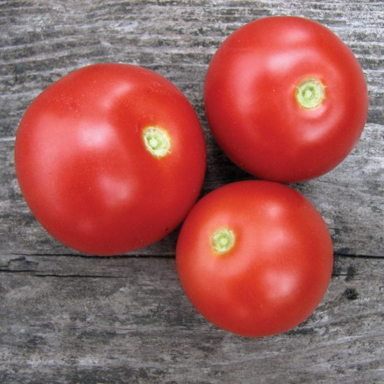 Tomate 'Czech's Bush'