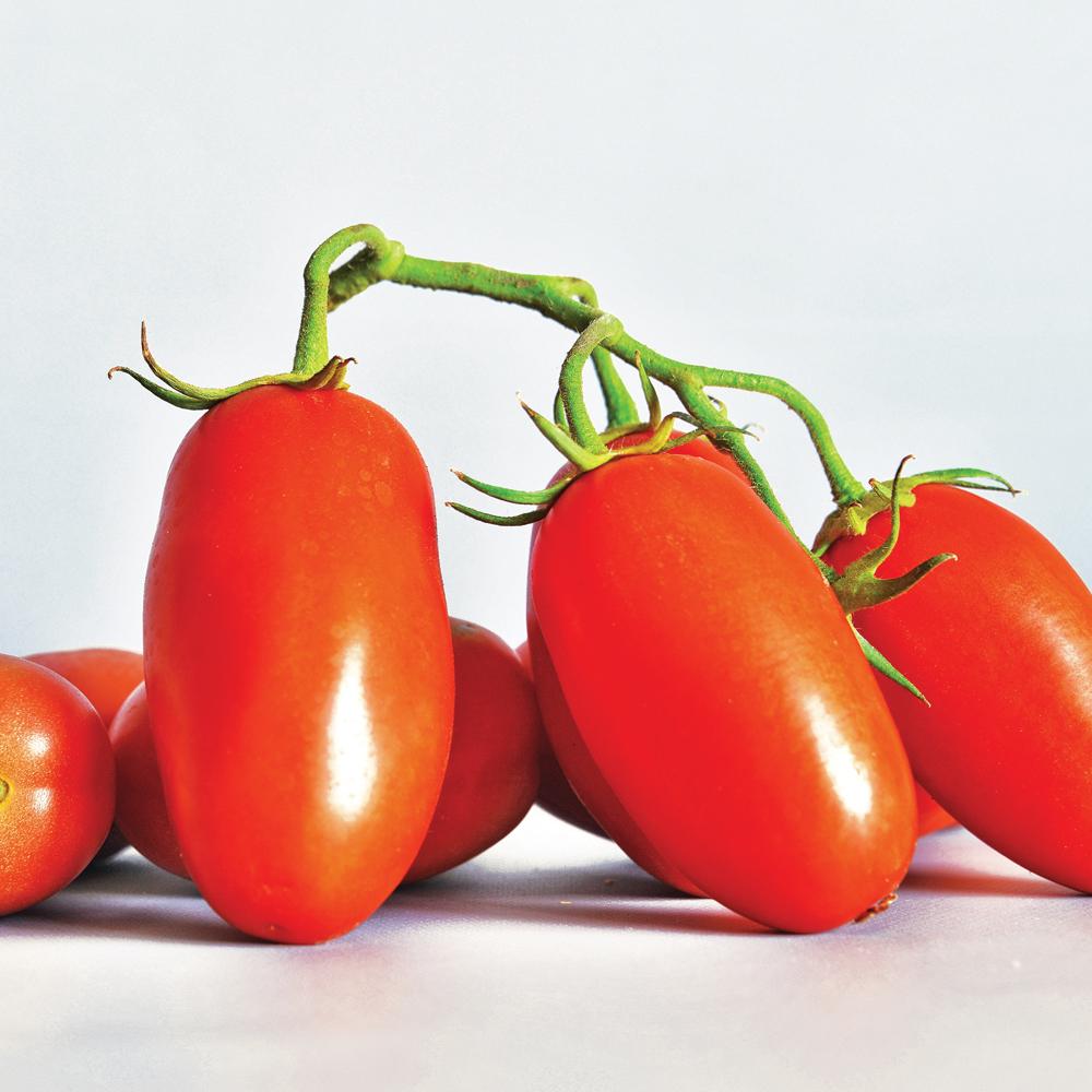 Tomate 'San Marzano'