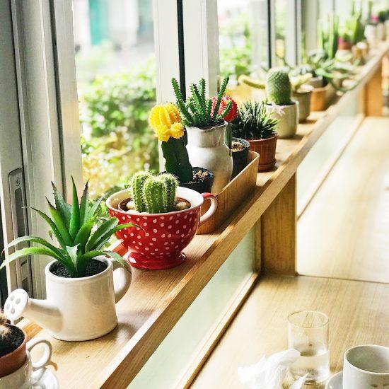 Tout savoir sur les cactus