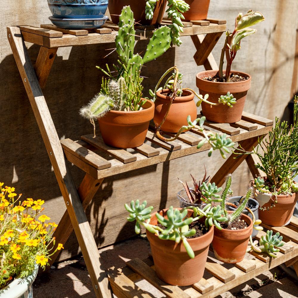 Un escabeau comme support à plantes