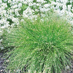 Herbe fibre optique 'Live Wire'
