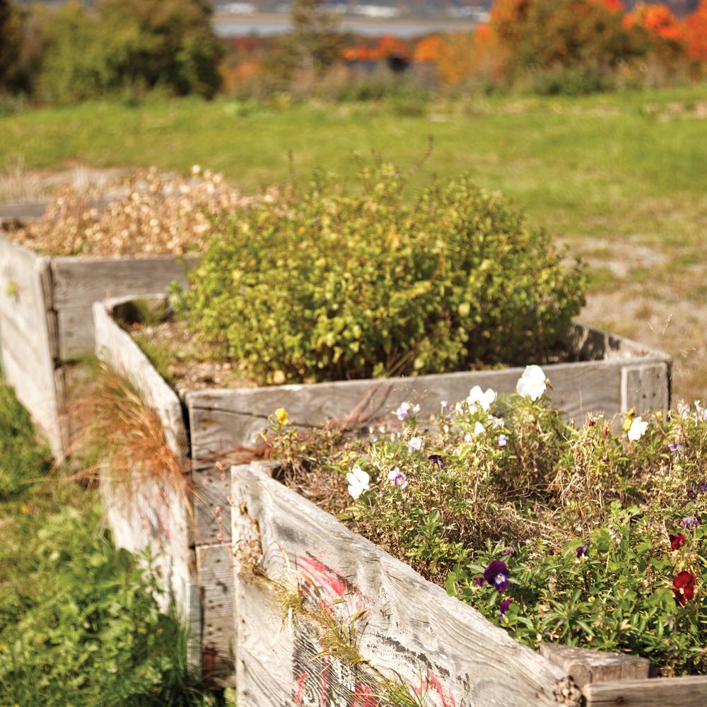 Quoi faire en fin de saison au jardin?