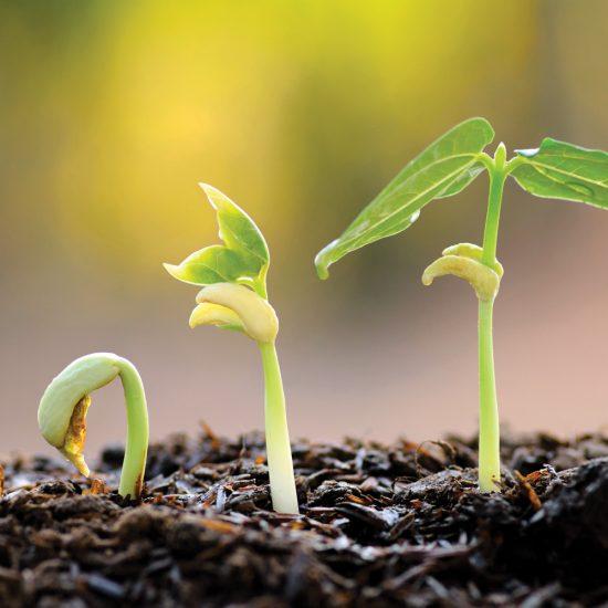 Quelles semences peut-on récolter ?