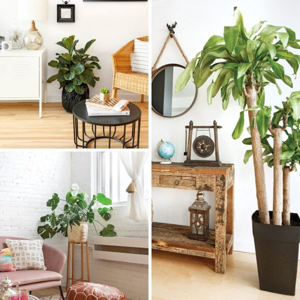 8 plantes qui purifient l'air