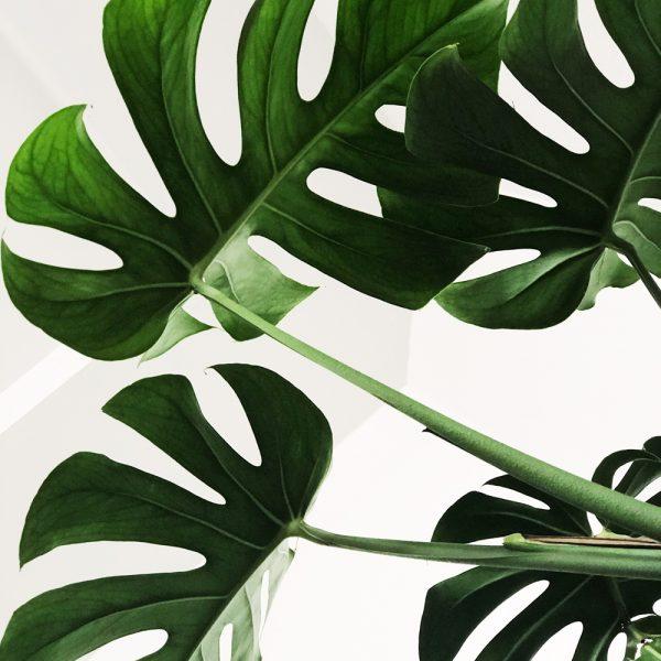 5 plantes parfaites à offrir en cadeau
