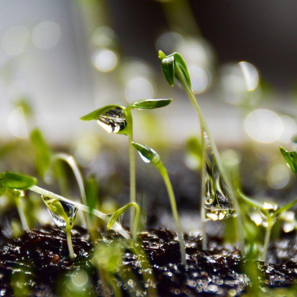 Calendrier des semis de légumes classés par zones de rusticité
