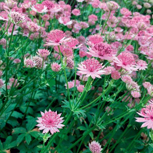 Bien vivre au jardin: 5 vivaces qui poussent aussi bien à l'ombre qu'au soleil
