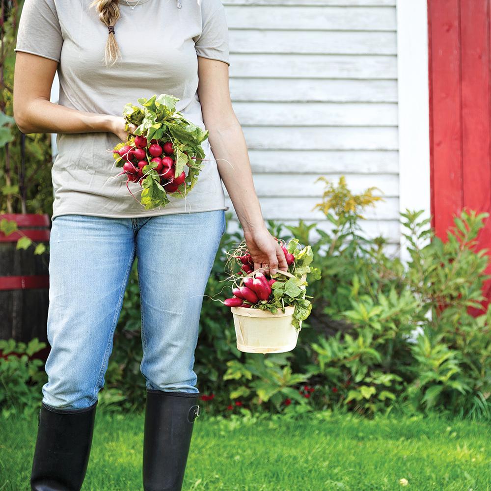Les mythes au jardin: démystifier le vrai du faux