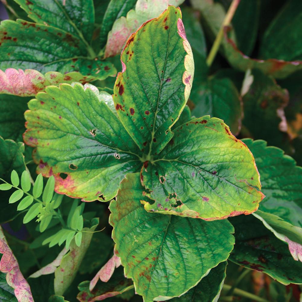 Plantes et maladies: 5 trucs pour les éviter