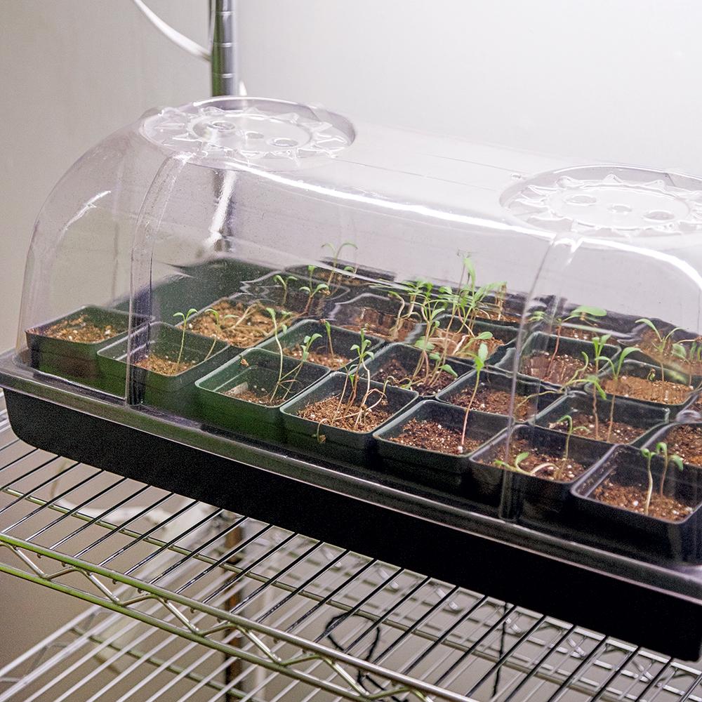 Comment cultiver des micropousses