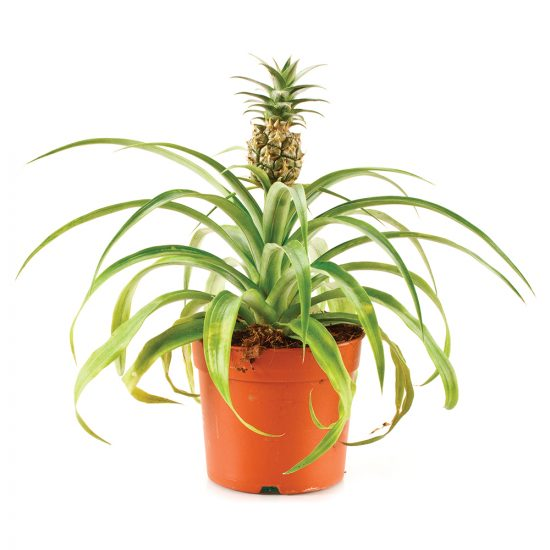 Comment transformer 7 graines et noyaux en plantes exotiques