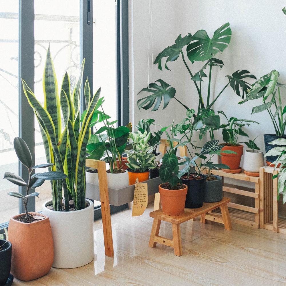 Printemps: 5 astuces pour prendre soin de ses plantes d'intérieur